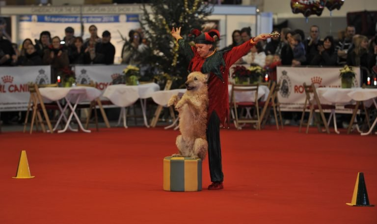 DoggyDance of Canine Freestyle