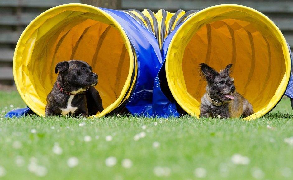 agility sport