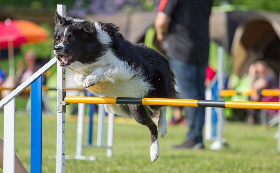 agility springen